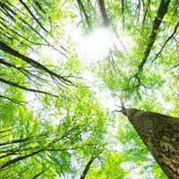 Gestione risorse forestali e Piani d'assestamento